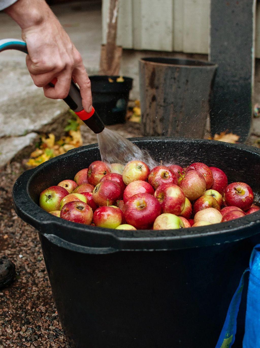 Første steg er å skylle eplene.