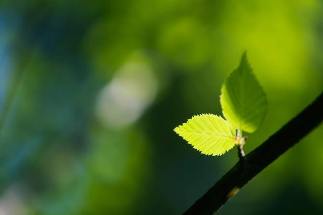 young leaf on branch