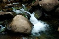 water brook with stones