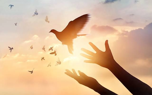 Hands up letting doves fly