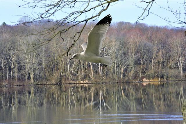 Bird flying low over water