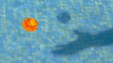 Flower floating in pool of water with shadow of hand grasping it