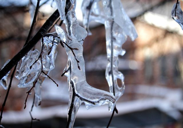 Branches covered in ice