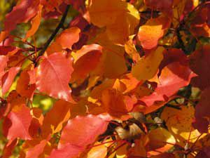 Autumn Leaves with shadows on tree