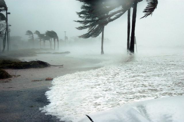 stormy beach and wind blown palm tree