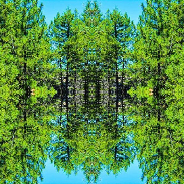 Forest trees reflection on lake