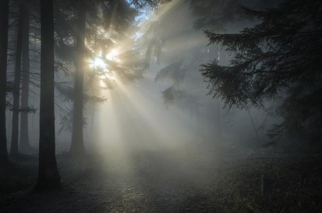 mist in morning forest