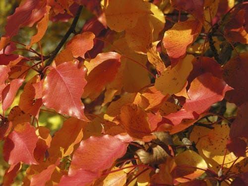autumn leaves on tree close up