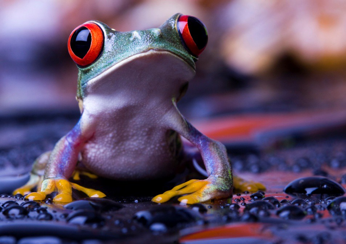 colorful jungle frog looking up with big eyes