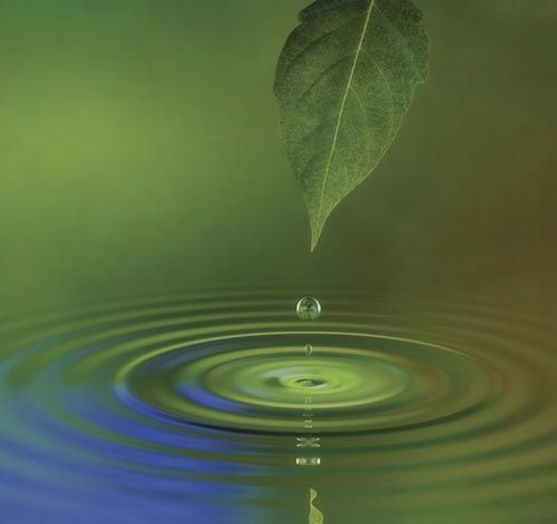 Leaf dropping water from gravity