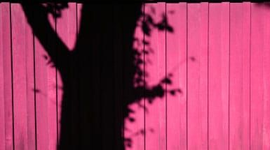 Tree with branches and leaves shadow on pink fence