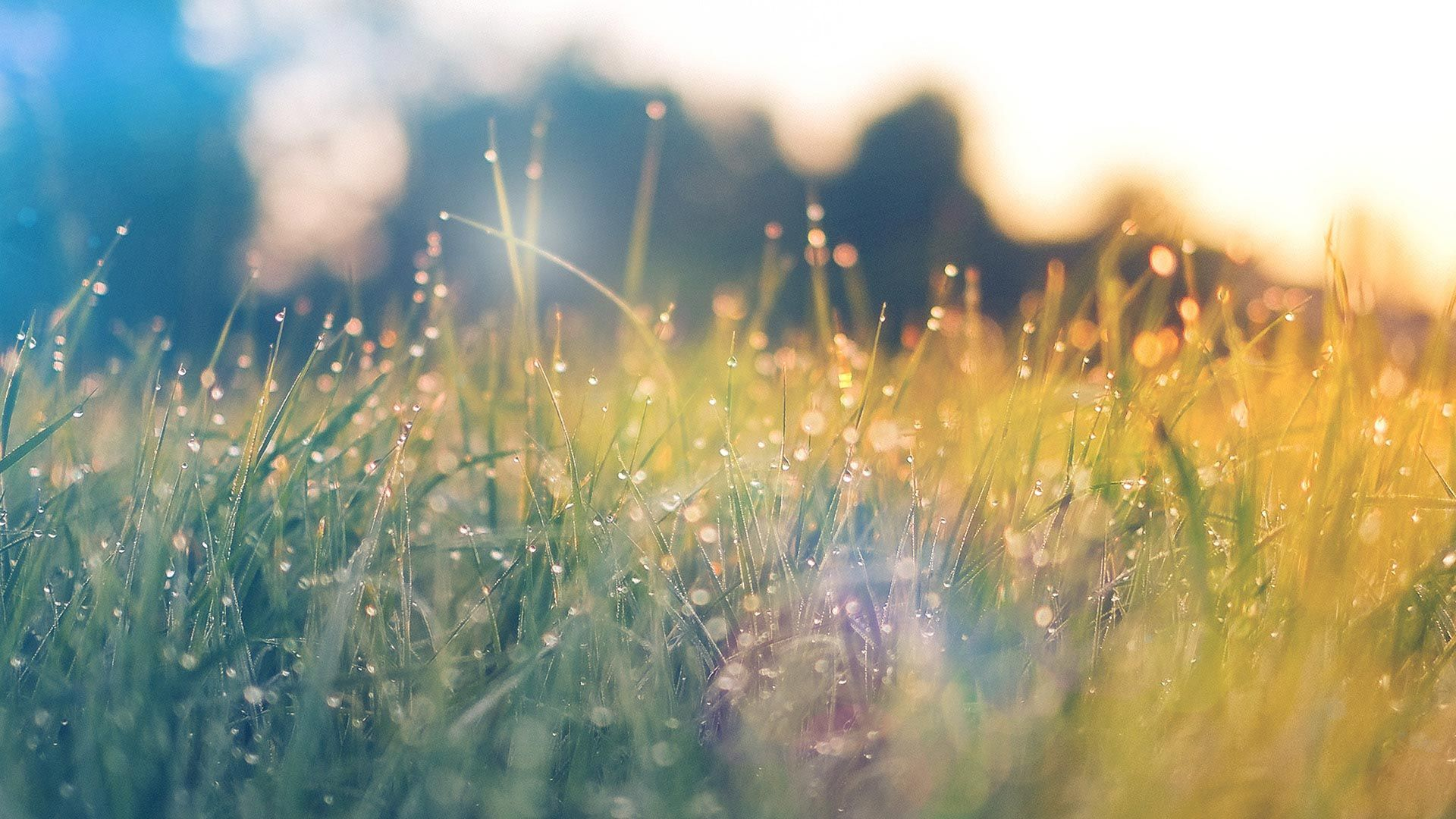 Grass in a field with light and water beads