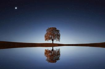 Tree on the shore of a lake at night