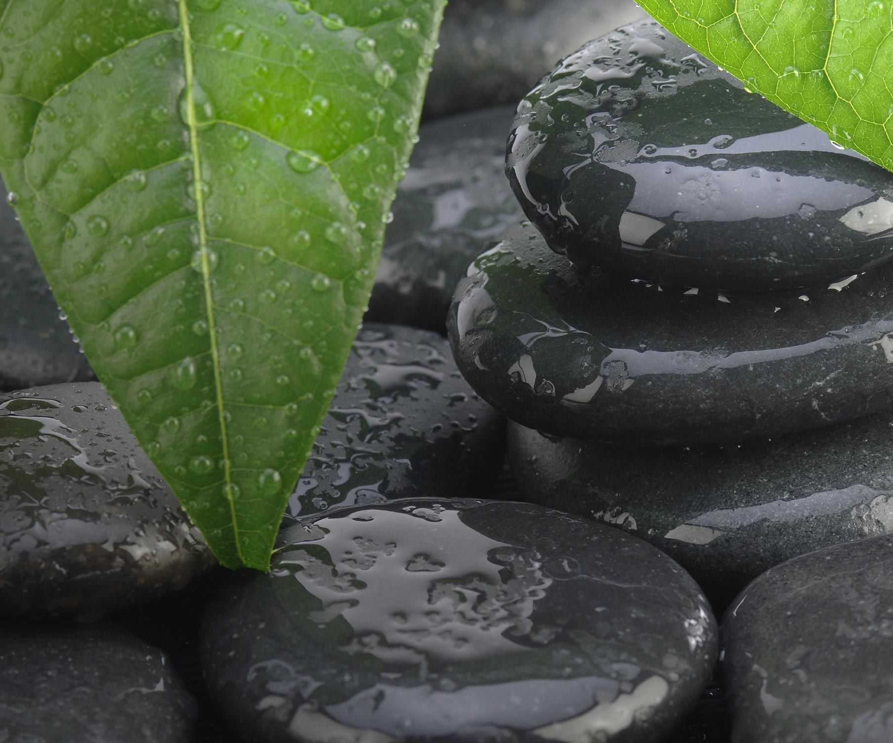 Leaves stones and water