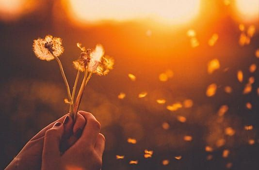 Person holding dandelion blowing in wind at sunset