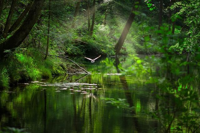 Still pond in forest