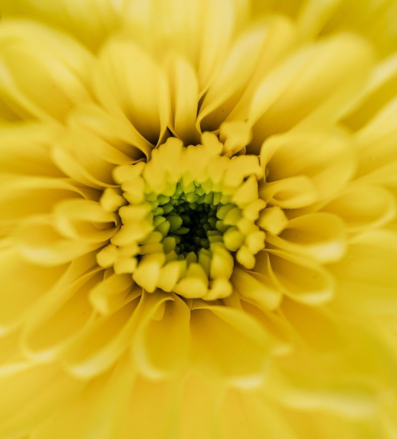 Yellow flower up close