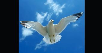 White bird in flight across sky with sun and clouds