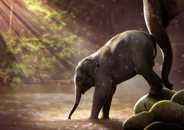 Baby elephant and adult elephant walking in savannah