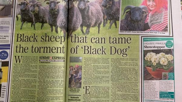 The Crowkeld Flock in the Sunday Express