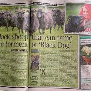 Crowkeld Flock in the Sunday Express