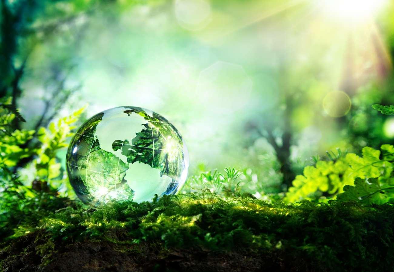 importancia medio ambiente