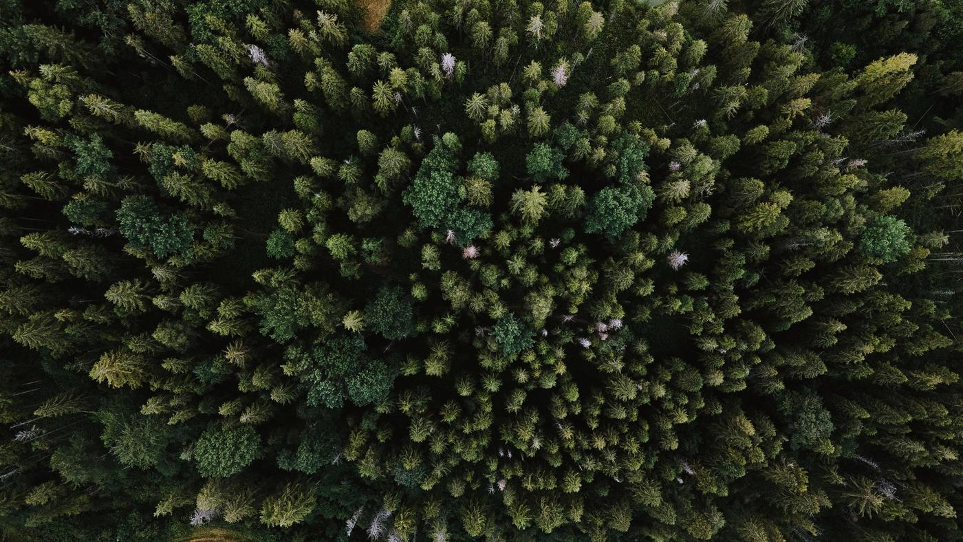 día de los bosques