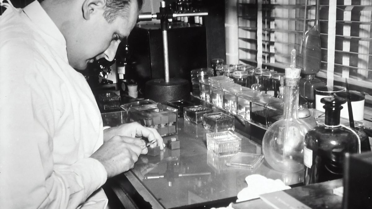 A Caucasian male technician preparing tissue to be stained and studied histologically in a laboratory. 1950