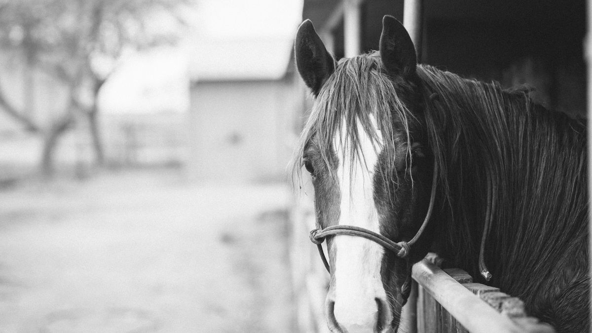 A horse looking at you with its sexy bangs
