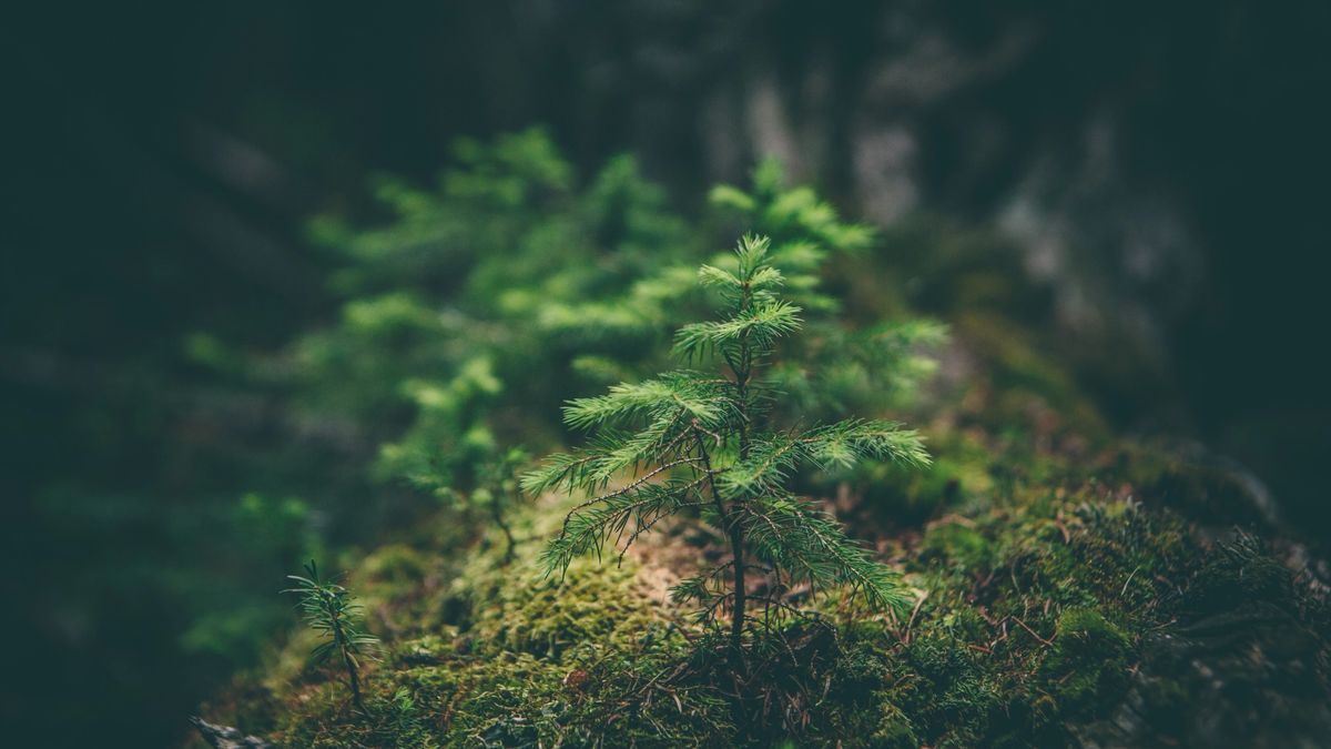 A tiny tree just beginning to grow from the forest flor