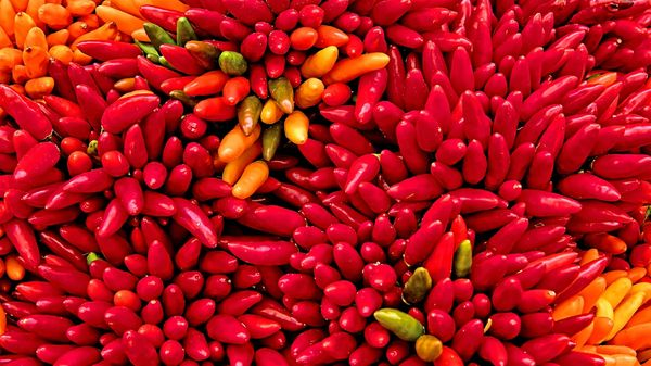 A bunch of red chilis
