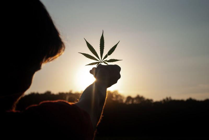 3 Top Types of Marijuana Concentrates - Naturaleaf