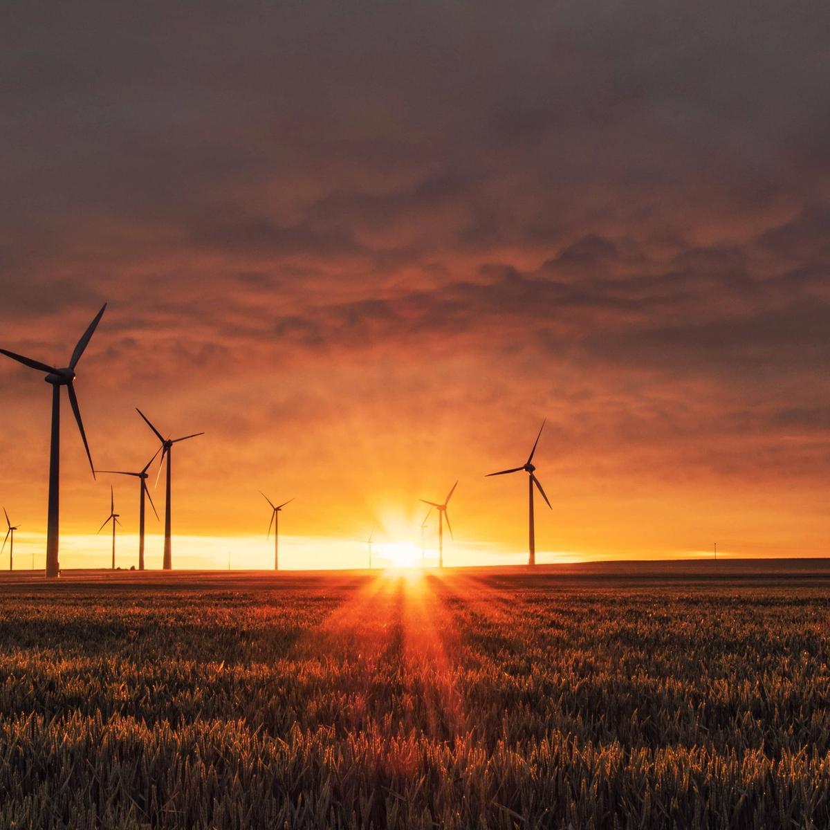 Photo of wind turbines in a field