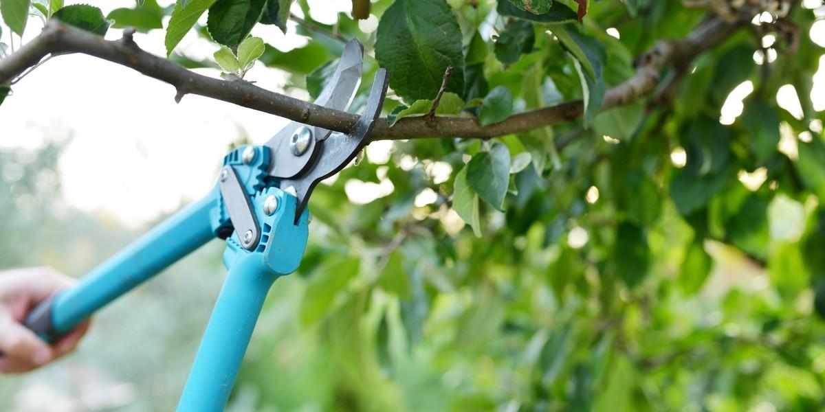 Dette kan du gjøre med naboens hekker og trær