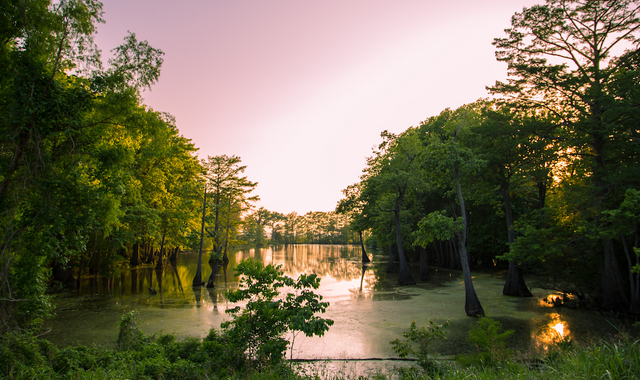 Cover Image for Natchez, Mississippi