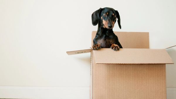 Picture of a dog in a moving box