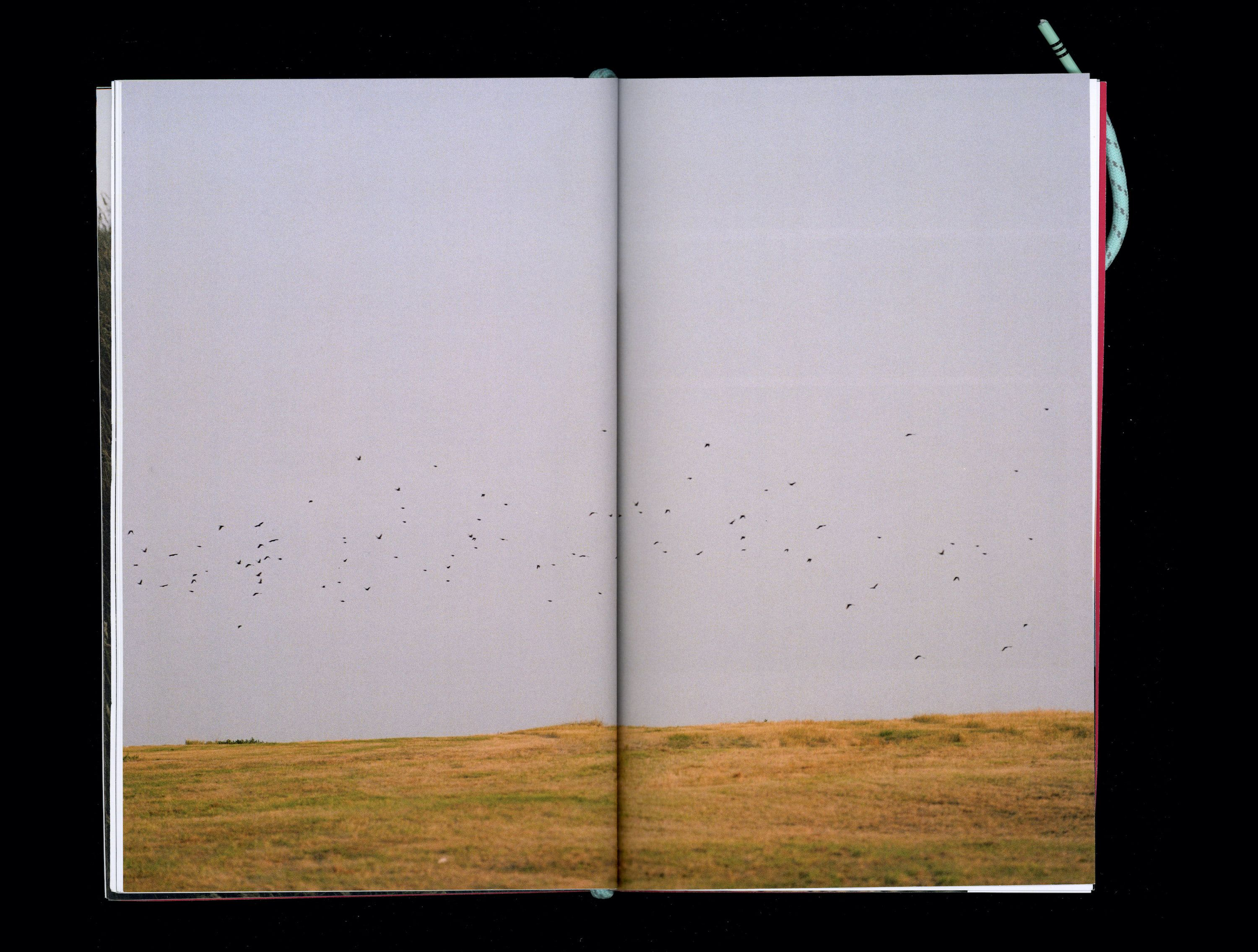 Photograph in book of flock of small black birds flying above sunlit grass plain