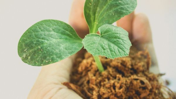 Image of plant growing in a hand