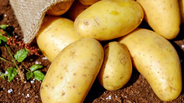 Potatoes on the ground.