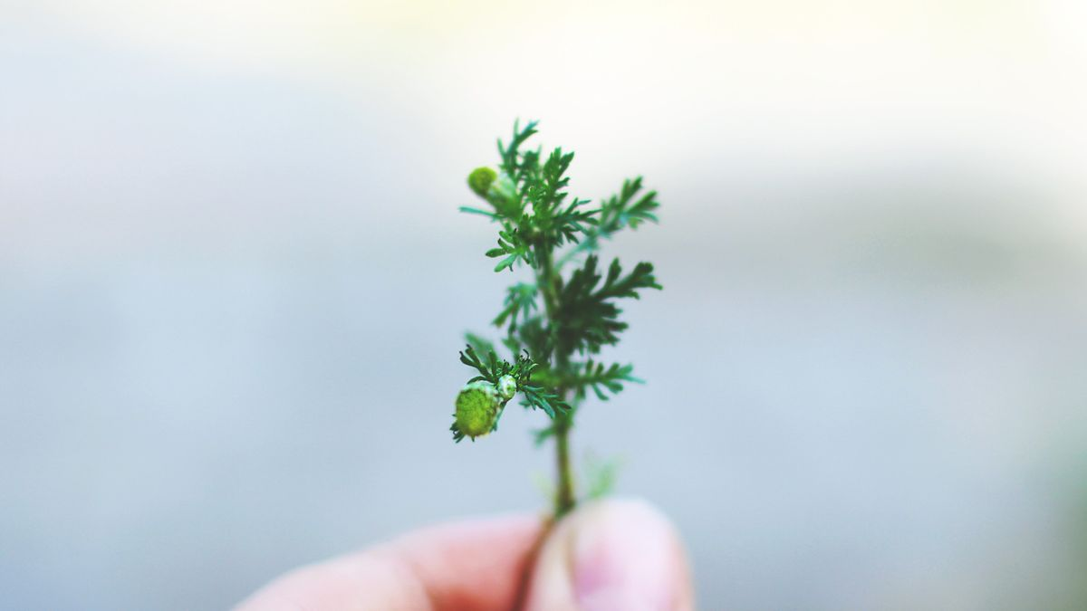 A hand holding a small plant