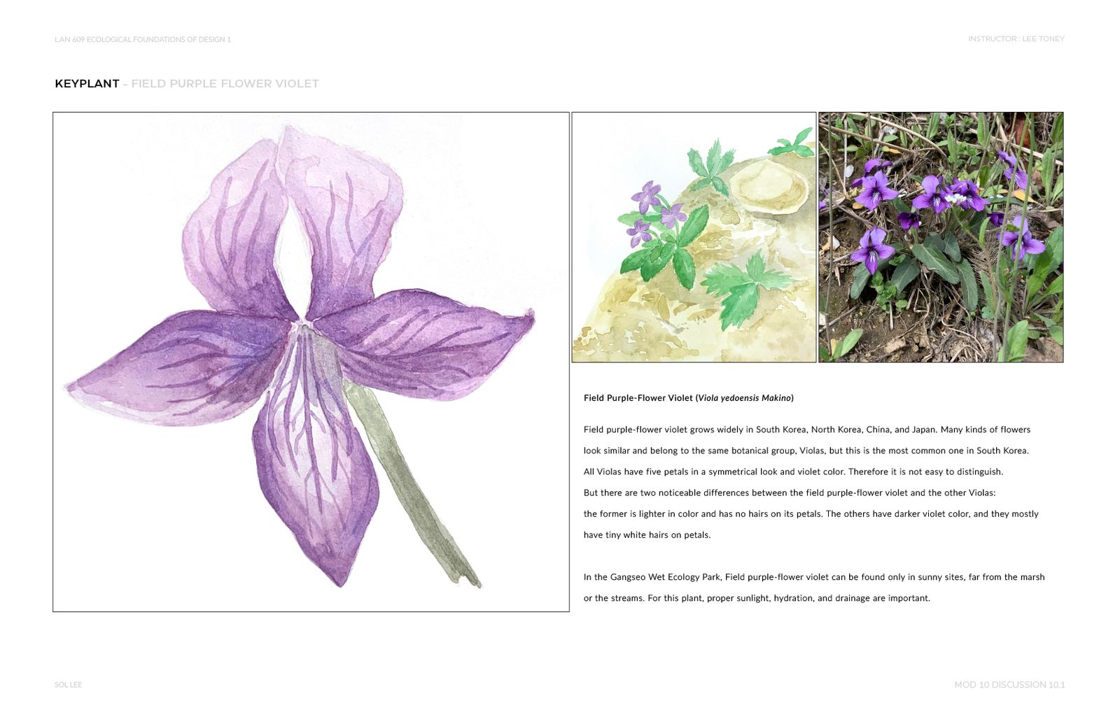 Gangseo Wet Ecology Park - Key Plant - Field Purple Flower Violet