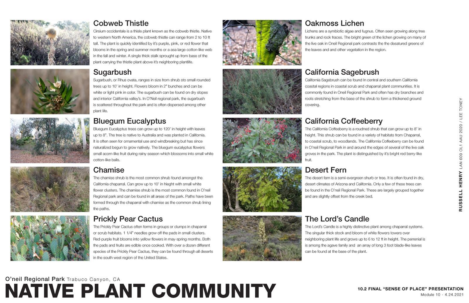 Sense of Place - Native Plant Community
