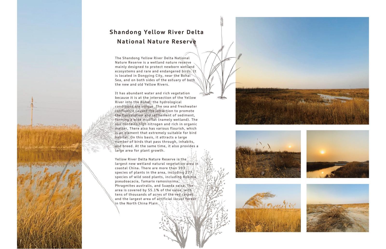 Shandong Yellow River Delta