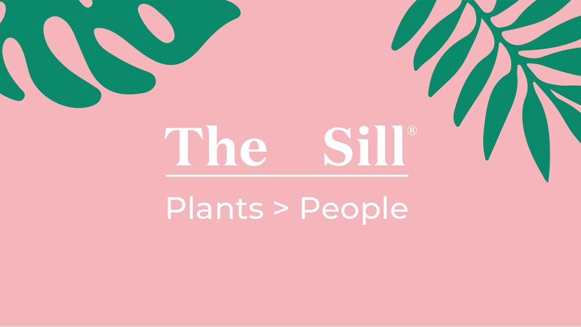 The Sill - Veronica Alcocer