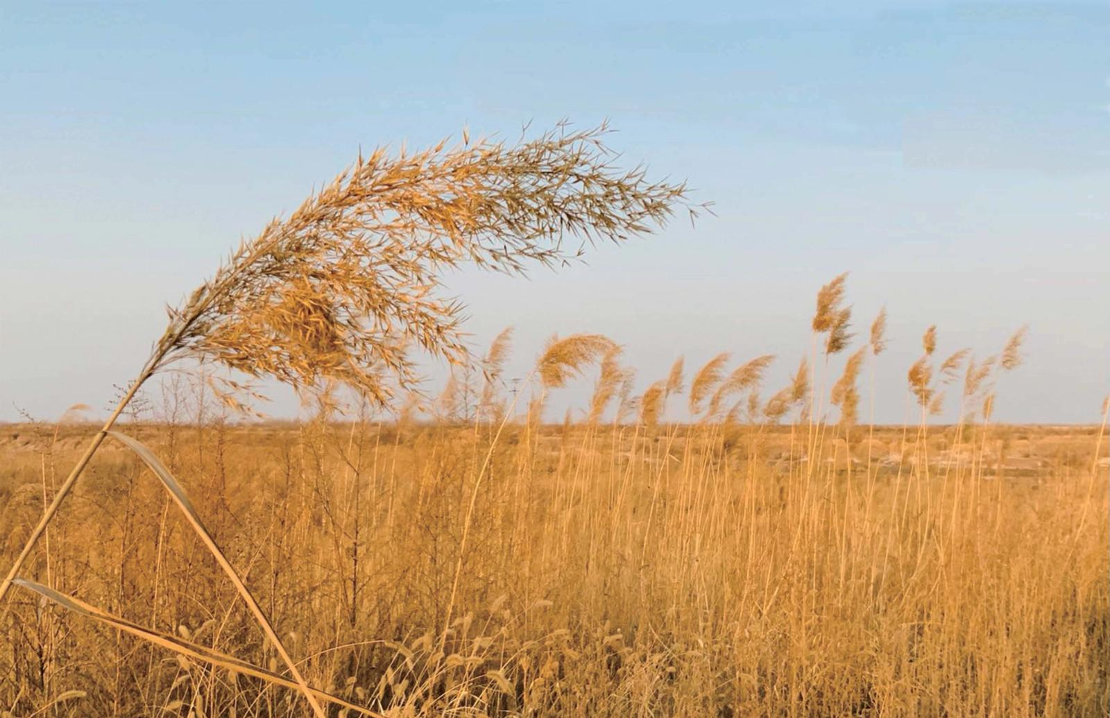 Yellow River Delta Nature Reserve