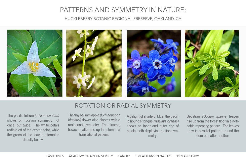 Huckleberry Botanic Regional Preserve - Patterns and Symmetry 2
