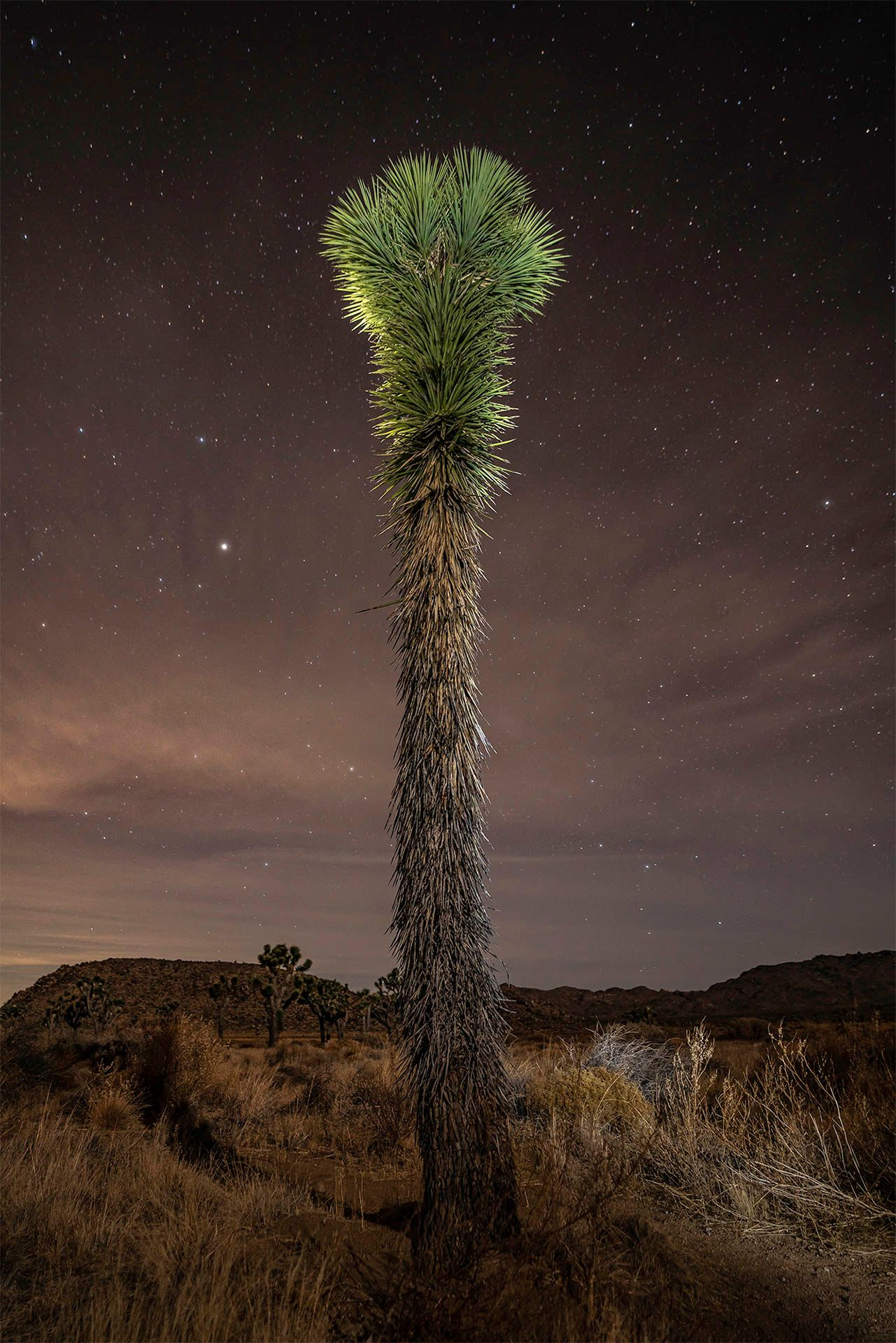 Joshua Tree Series
