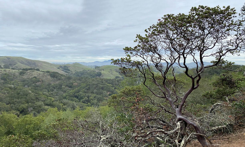 Huckleberry Botanic Regional Preserve - Title Page