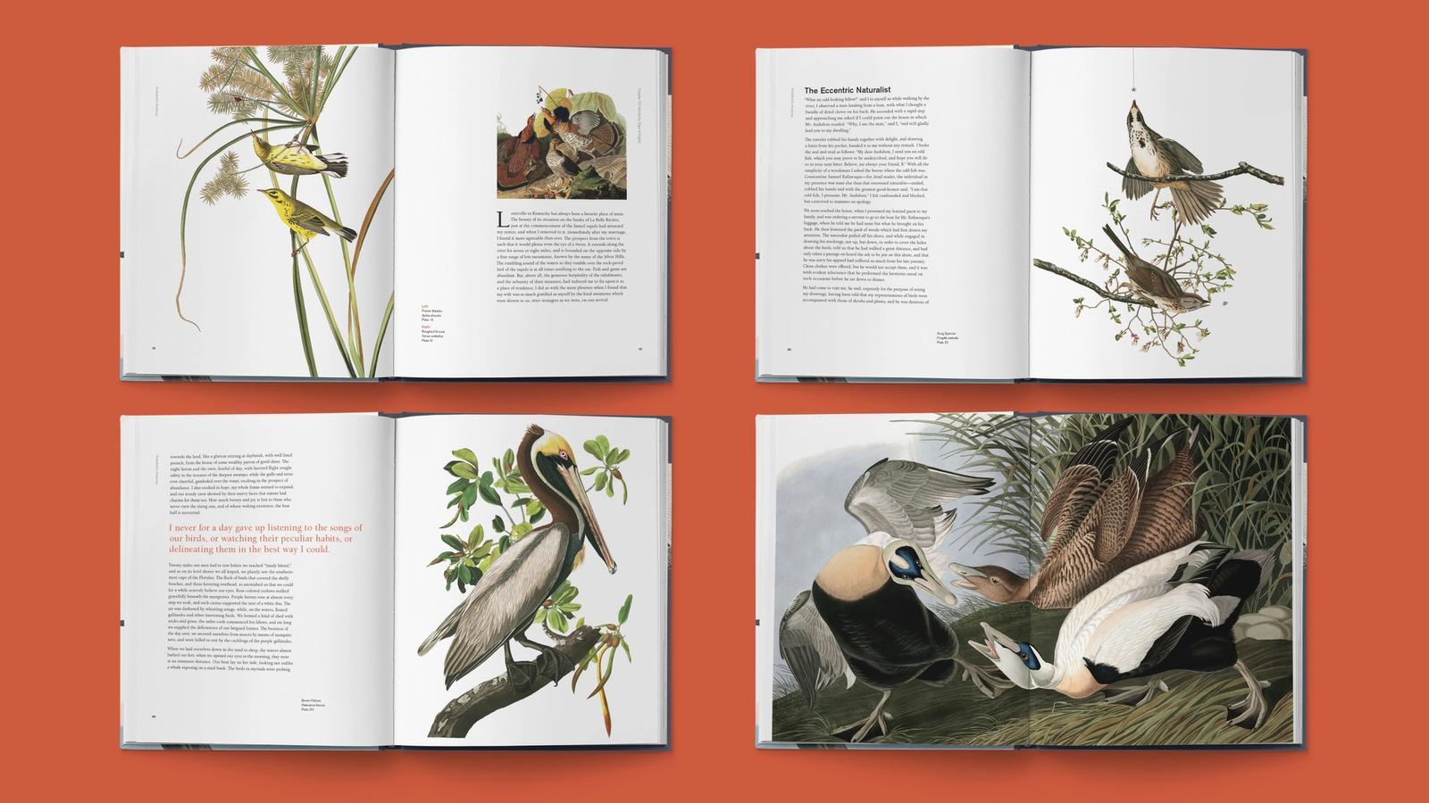 Audubon's America // Book Interior