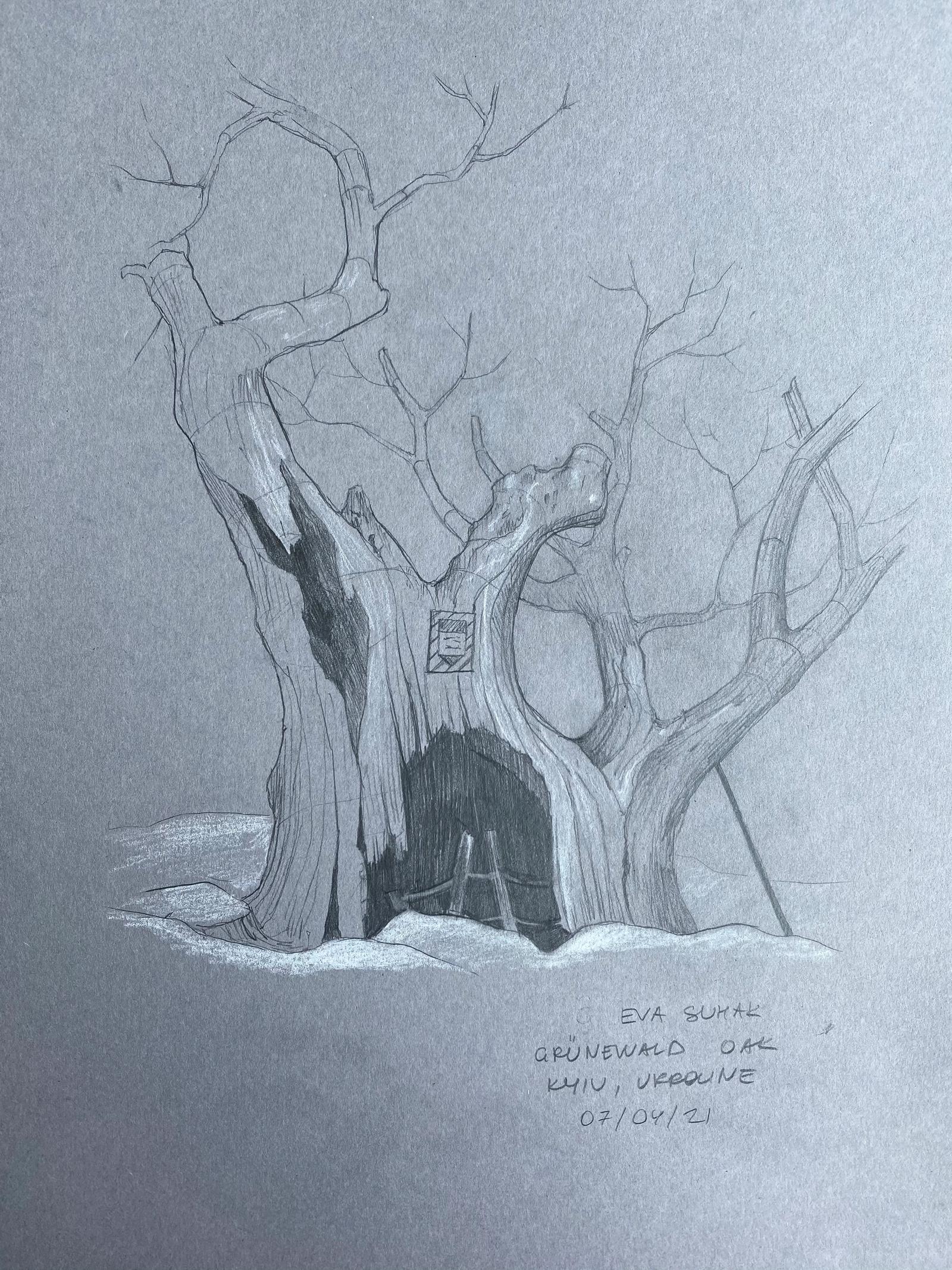 Grünewald Oak